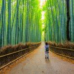 L'ANNO CHE VERRA' …COSA CI ATTENDE ? di Cammina nel Sole