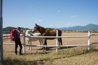 Cammino Terre Mutate Tappa 1 Fabriano Matelica cavalli