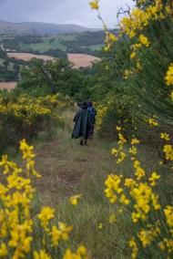 Cammino Terre Mutate Tappa 3 Camerino Fiastra fioritura di ginestra