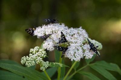 Cammino Terre Mutate Tappa 4 Fiastra Ussita la biodiversità del parco dei sibillini (3)
