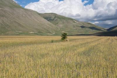 Cammino Terre Mutate Tappa 7 Norcia - Castelluccio di norcia (33)