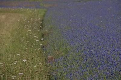 Cammino Terre Mutate Tappa 8 Castelluccio di Norcia - Arquata del Tronto (10)