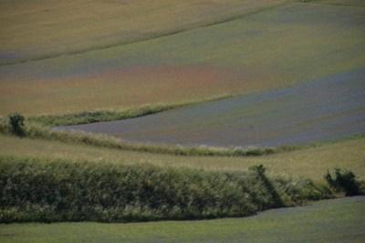 Cammino Terre Mutate Tappa 8 Castelluccio di Norcia - Arquata del Tronto (22)