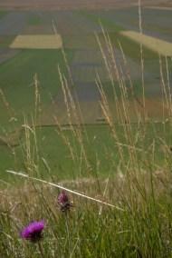 Cammino Terre Mutate Tappa 8 Castelluccio di Norcia - Arquata del Tronto (24)