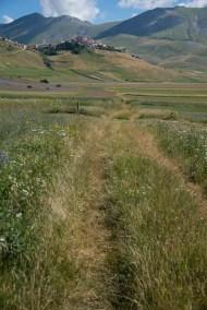 Cammino Terre Mutate Tappa 8 Castelluccio di Norcia - Arquata del Tronto (54)