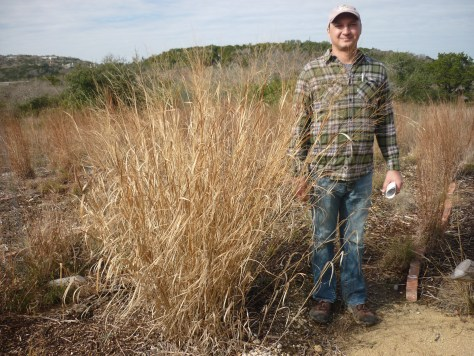 Switchgrass almost as tall as Jason