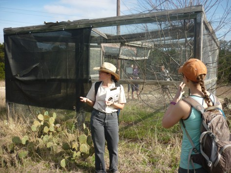 Lila telling about the brown-headed cowbird trap