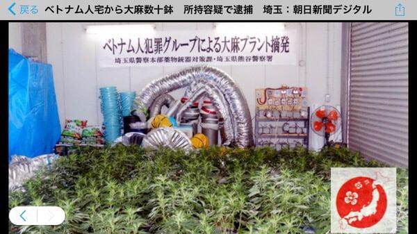 Việt Nam trồng ma túy tại nhà ở Nhật