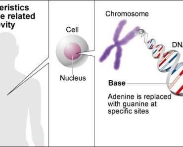 Các nhà khoa học Nhật Bản tìm ra một loại gien được cho là có thể giúp con người sống lâu trăm tuổi - Ảnh: Asahi Shimbun