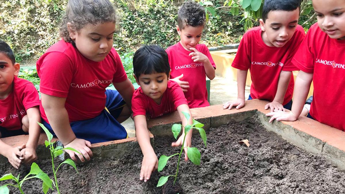 Blog | A Idade Escolar Ideal