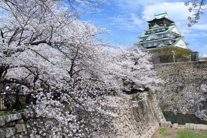 大阪でお花見キャンプ