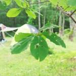 夏のキャンプを涼しく過ごせる兵庫県の高原キャンプ場6選