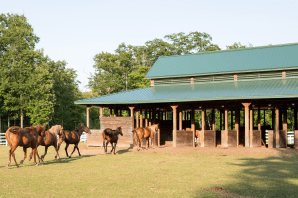 Equestrian Building at Northwoods