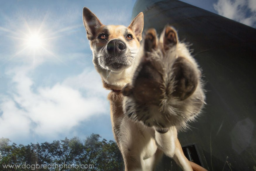 dog-breath-photography-kaylee-greer-14-cotw