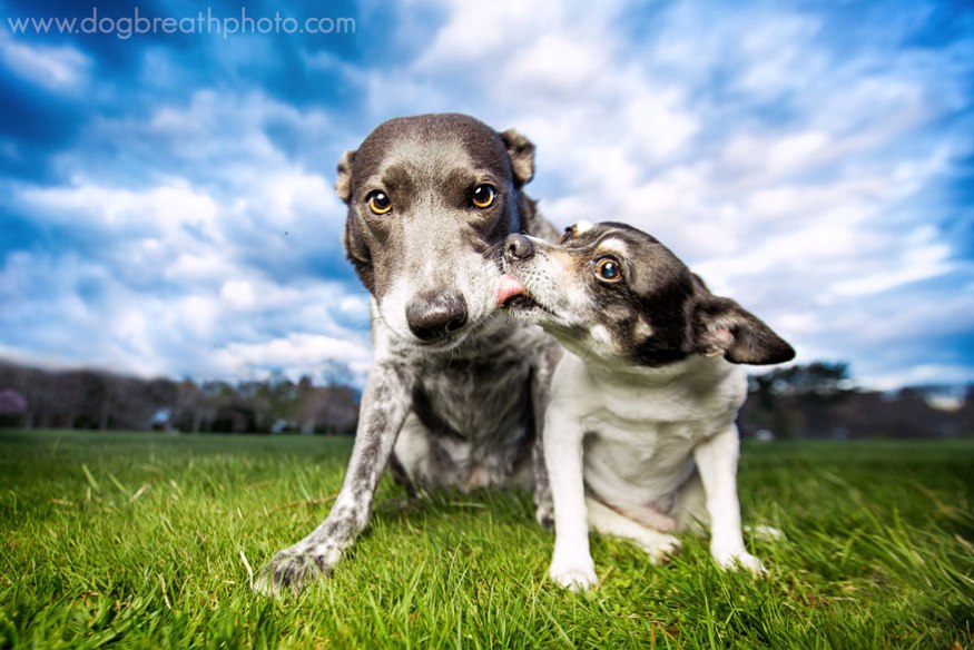 dog-breath-photography-kaylee-greer-18-cotw