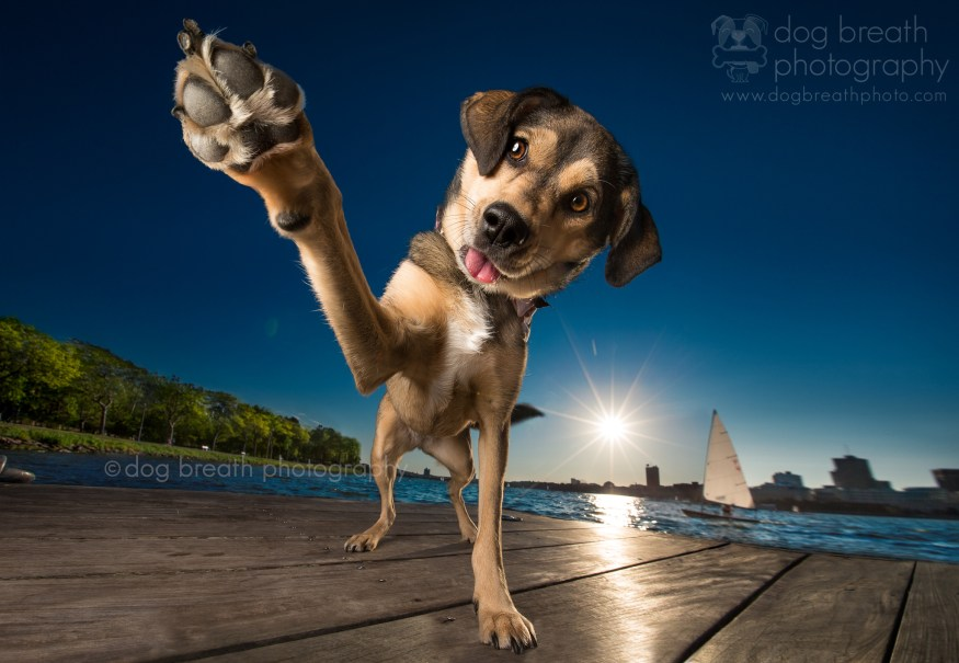 dog-breath-photography-kaylee-greer-3-cotw