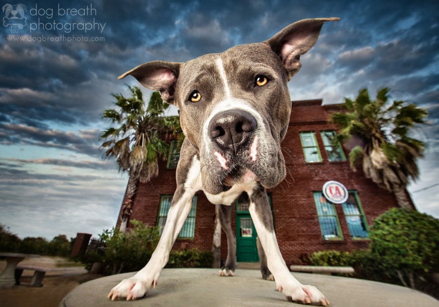 dog-breath-photography-kaylee-greer-32-cotw