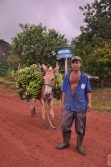 Indígena transportando produção de banana, produto comercializado pelos Tupinambá, 2012, por Daniela Alarcon.