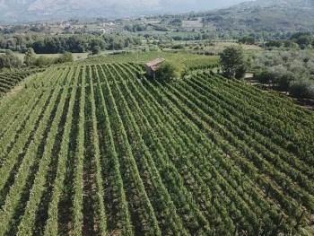 Weinguts Cardosa - Castel San Lorenzo DOC Cilento