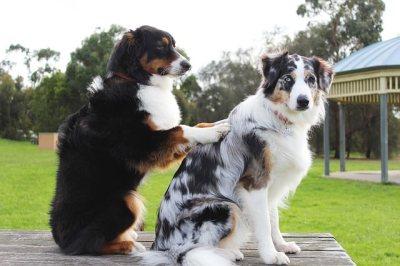 犬の肩もみ