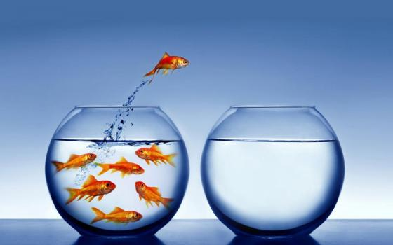 introvert-pic-goldfish