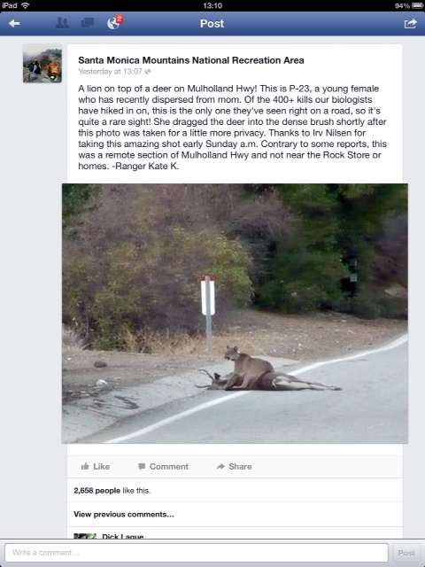 What a ranger posted on FB  a few days ago: mountain lion organizing her lunch