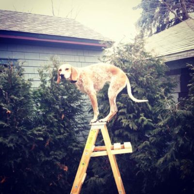 dog on ladder