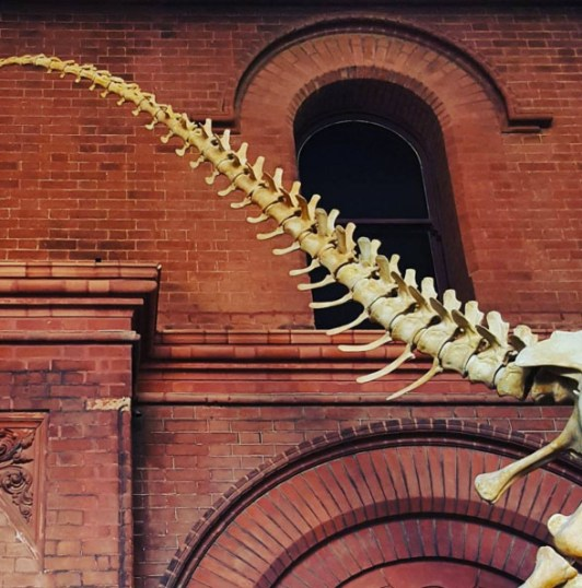 South Australian Museum Photo: WaitingForKate