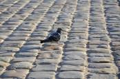 Pigeons. Everywhere.