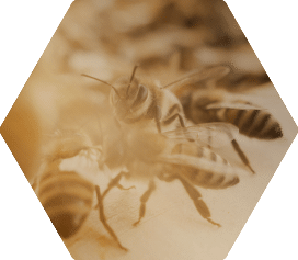 Learn More About Bees
