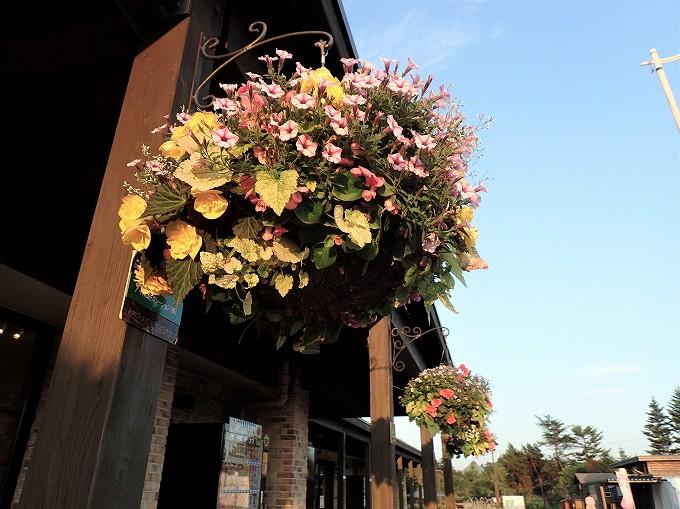 北海道 車中泊 恵庭 花ロード えにわ 札幌周辺