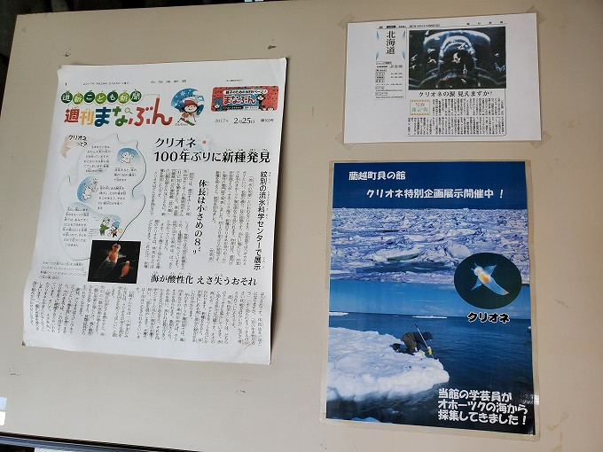 蘭越 貝の博物館