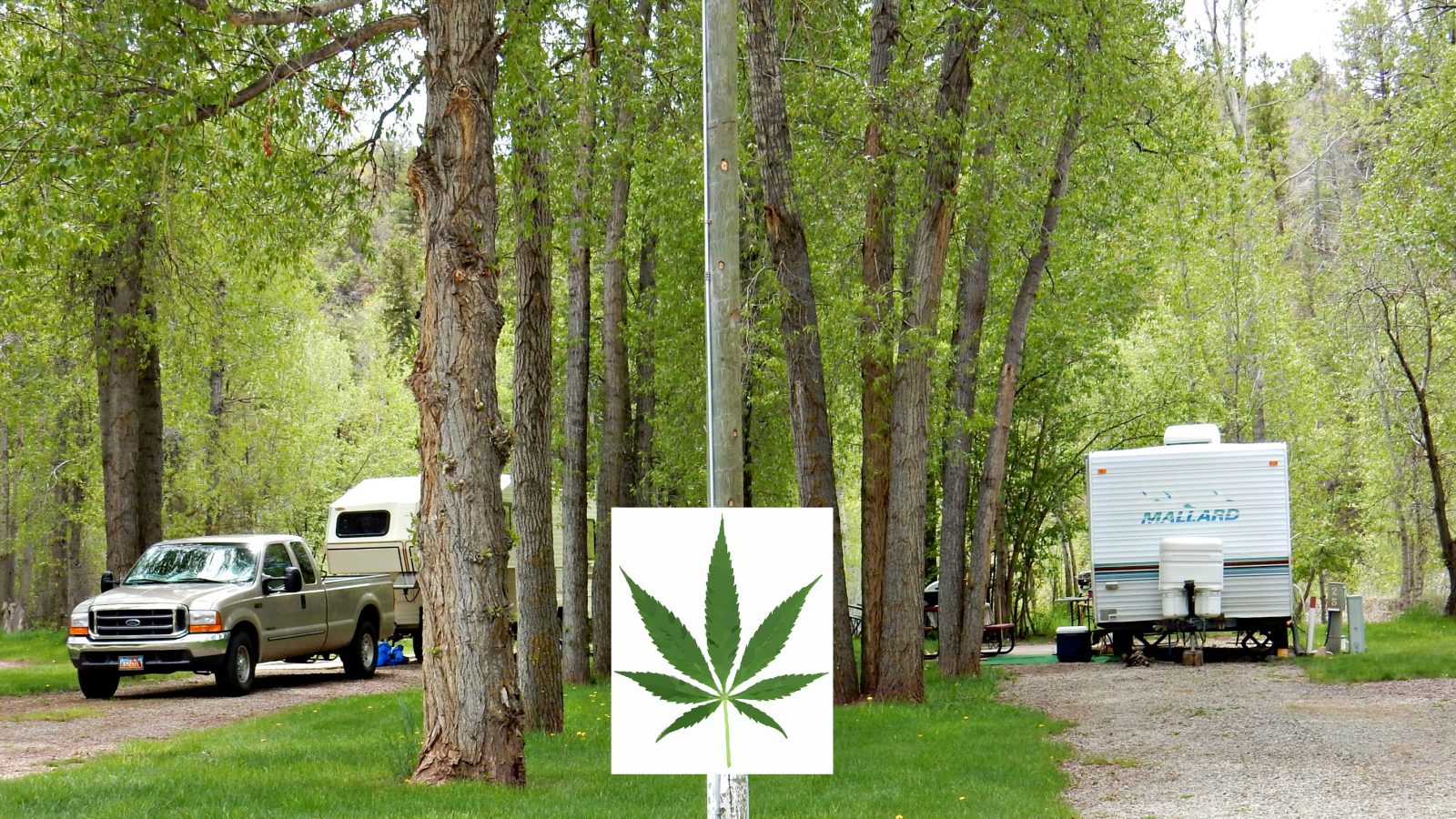 Camping in Colorado: cannibas, marjiuana, THC