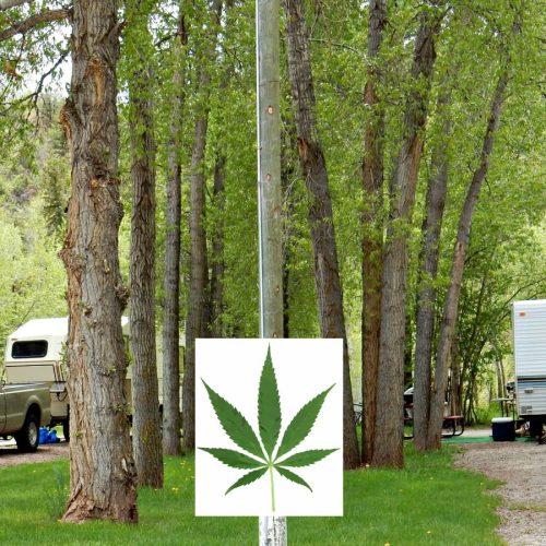 Camping in Colorado: cannibas, marjiuana, THC