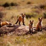 Get a view of the (cute) wildlife at Muddy Creek Cabins (Kremmling CO)