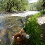 A beautiful river to relax by at Riverview RV Park! (Loveland, Colorado)