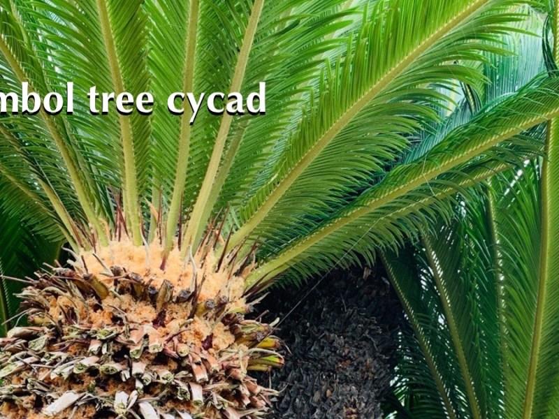 Symbol tree cycad