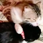 オス猫とメス猫を飼っている場合の悩み