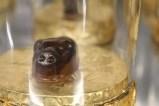 154 RESTAURANTE ABRELATAS: Chocoastur