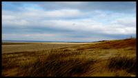 beach dunes Egmond aan Zee Netherlands
