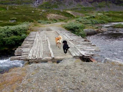 Pause auf dem Trollstigen