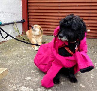 Hunde warten vor Restaurant