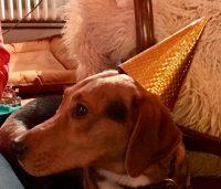 Hund Frieda mit Partyhut