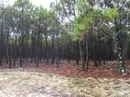 Wälder so weit das Auge reicht