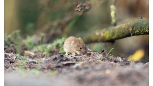 how-to-keep-mice-out-camper