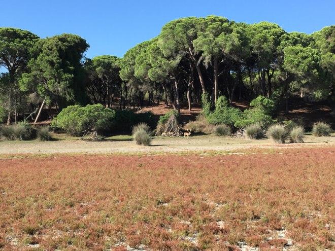 Het park Doñana en enkele herten