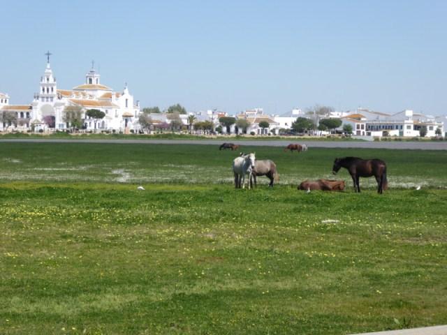 De bedevaartskerk van El Rocio die tegenover het nationale park Doñana ligt.