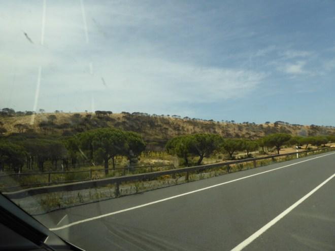 Vanuit Matalascañas richting Mazagon word je geconfronteerd met de eerste verwoestingen. (nummer 1)