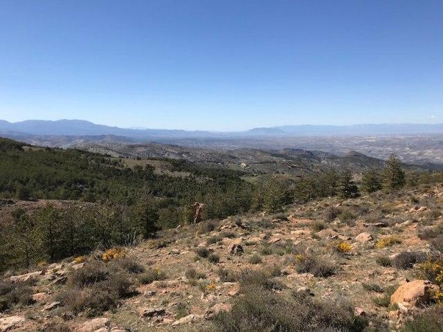 De omgeving van Las Menas is groen geworden dankzij een herbebossingsprogramma.