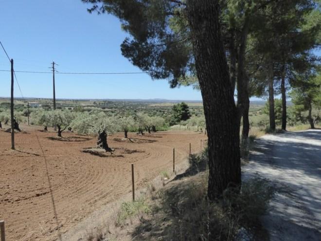 Een kijkje over het vruchtbare land rondom Serpa.